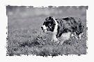 Fetch by Matt Sillence