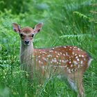 Ahhh at Knole Park by Stretch75