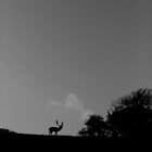 Stag Silhouette at Knole by Stretch75