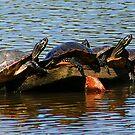 Sunning on a Log by Susan Blevins