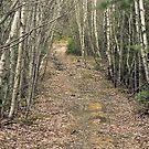 Mystery Wood by Maureen Kay