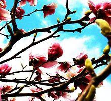 april flowers by tanmari
