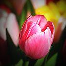 Pink Tulip by Terri~Lynn Bealle