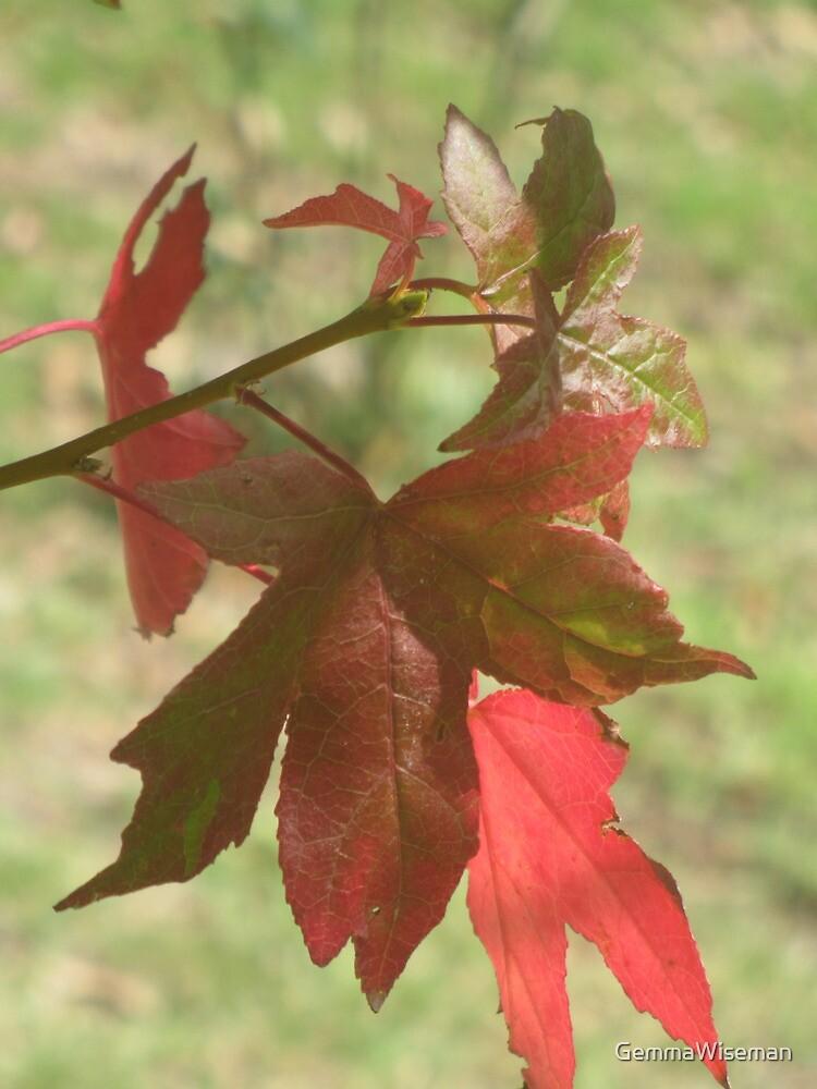 Fragments of a Liquidamber Autumn by GemmaWiseman
