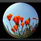 Praising Poppy by Visual   Inspirations
