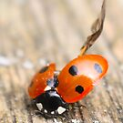 Crash Landing - A Ladybird puting themselves away by Daisy-May