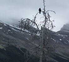 Solitary Raven by ArianaMurphy