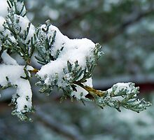 Snowy Limb by Susan Blevins