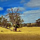Golden Landscape by Barb Leopold