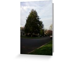 Lonesome Tree in the sunset of spring Greeting Card