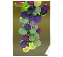 Rainbow Grapes - Hunter Valley, NSW Poster