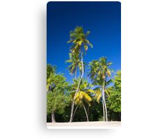 Coconut Palms on Tropical Island Canvas Print