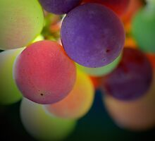 Multi-coloured grapes - Hunter Valley, NSW by graphicscapes