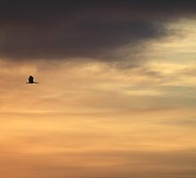 Morning Flight by Jenelle  Irvine