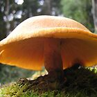 Gympnopilus Fungi. by LillyDigi