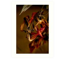 Tulip's Demise - A Natural Abstract Art Print
