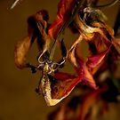 Tulip's Demise - A Natural Abstract by Lois  Bryan