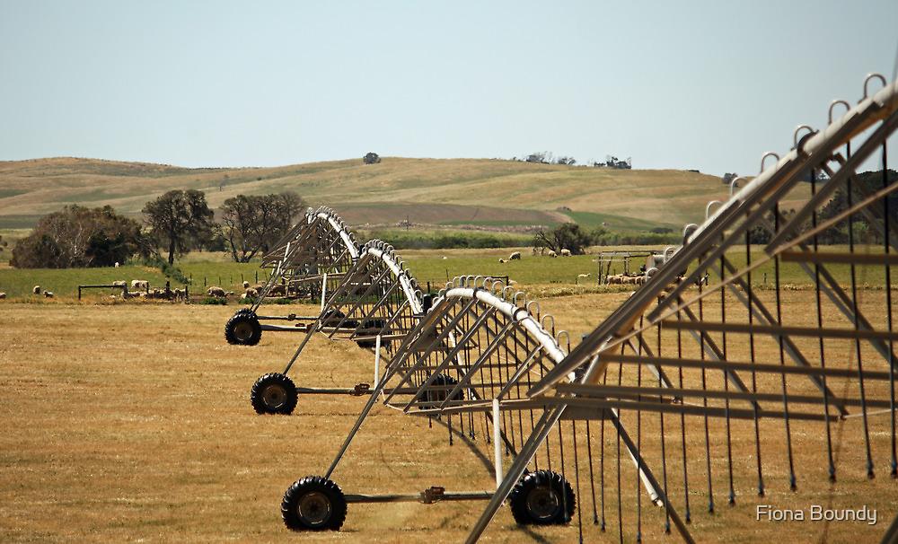Centre Pivot Irrigation, Mt Benson by Fiona Boundy