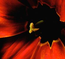 the tulip, inside... by Allan  Erickson
