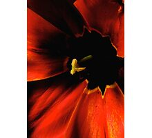 the tulip, inside... Photographic Print