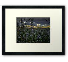 Wild Field Mint Framed Print