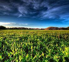 Feild of Greens by Bob Larson