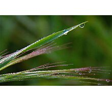 Green Grass, Dew Drops Photographic Print