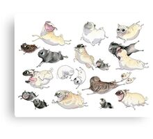 Pugs on the Run! Canvas Print