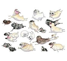Pugs on the Run! Photographic Print