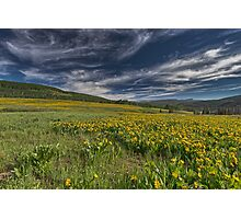 Meadow above Soapstone Basin in Utah Photographic Print