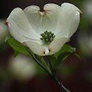 Chalice of Spring by ElyseFradkin