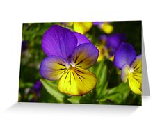 Purple and Yellow Vibrancy Greeting Card
