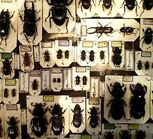Beetles on Cards by Erica Corr