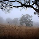 Foggy Summer Evening, Mount Barker by Barb Leopold
