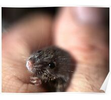 A baby mouse twitching his nose. Poster