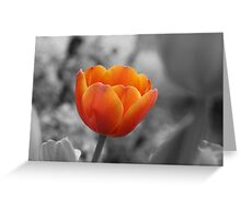 Tulip on fire Greeting Card