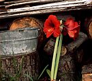Flower And Tin - La Puente by Larry Costales