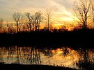 Reflecting Sunset by Veronica Schultz