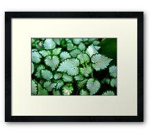 Silver Leaves - Rancho Cucamonga, CA Framed Print
