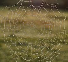 Barbed Wire and Lace by Barb Leopold
