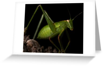 Grasshopper by Samuel Gundry