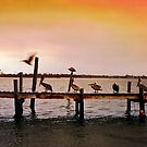 Pelicans on Pier - North Carolina by Larry Costales