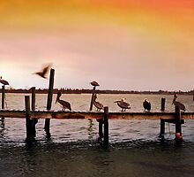 Pelicans on Pier - North Carolina by Larry3