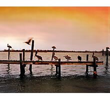 Pelicans on Pier - North Carolina Photographic Print