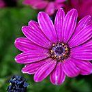 Purple Flower by Alan Brazzel