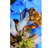 Blue Bumble Bee Photographic Print