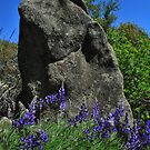 The Stone-Mariposa, Ca by Alan Brazzel