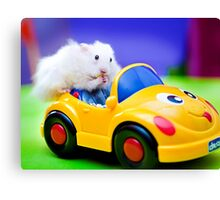 driving hamster Canvas Print