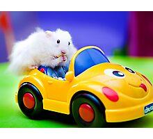 driving hamster Photographic Print