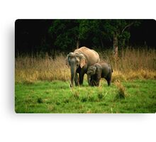 Elephant family - Learn care from the biggest land mammal Canvas Print